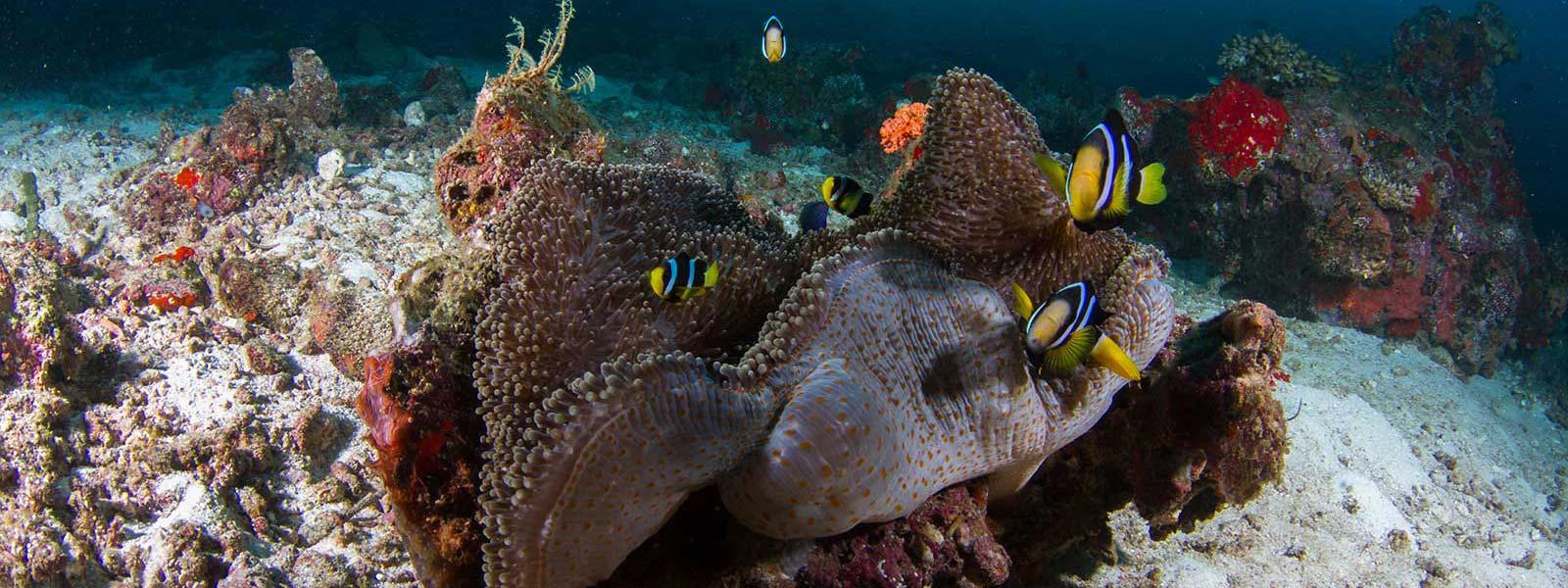 Maldives Snorkelling