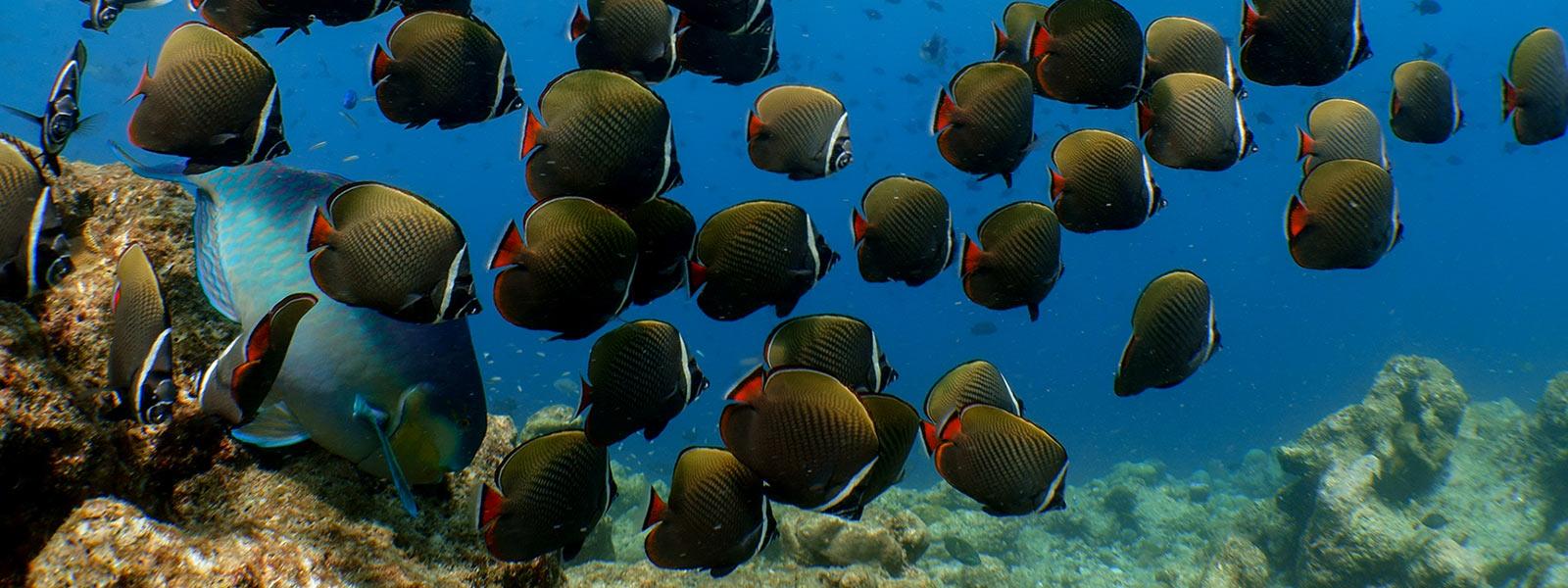 Maldives snorkelling excursion
