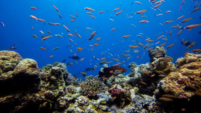 Maldives Luxury Snorkelling Excursions