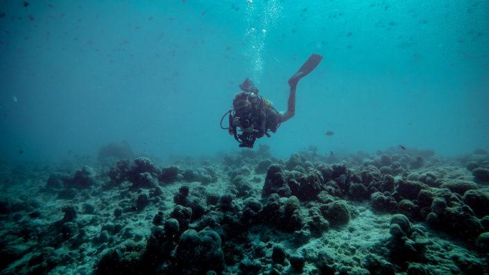 Maldives Photography Service
