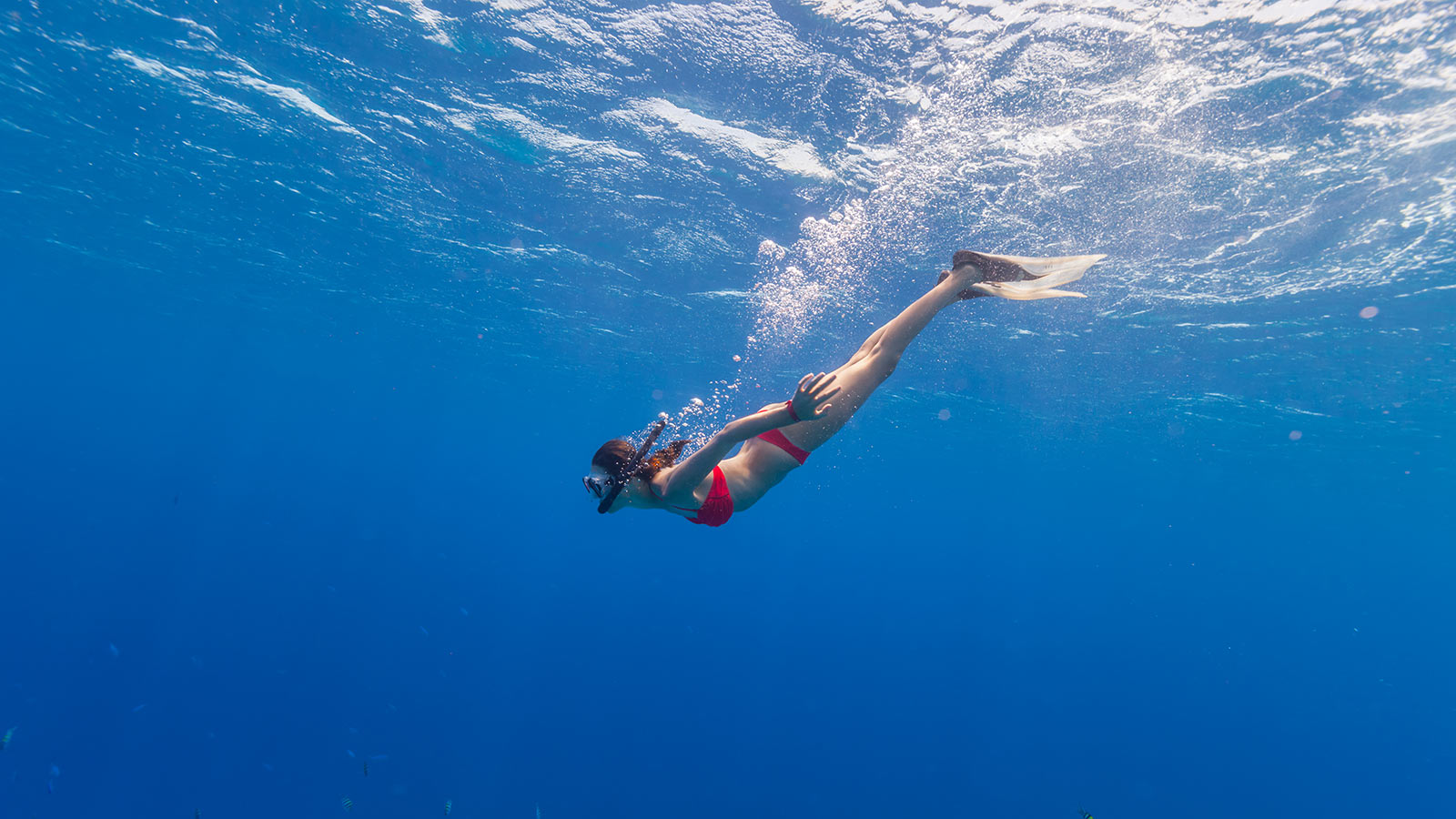 Freediving Courses And Tours