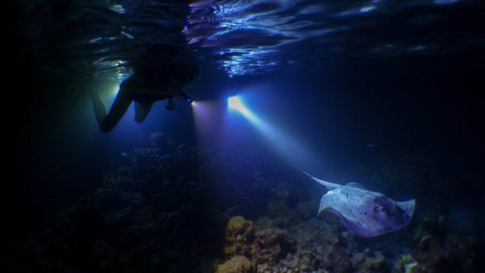 Maldives Night Snorkelling