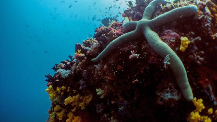 Maldives Marine Life